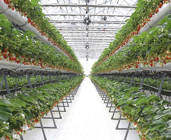阿蘇健康農園